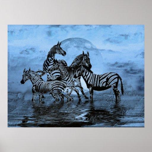 Zebras5 Poster