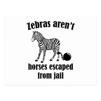 Zebras Aren't Horses Escaped From Jail Postcard