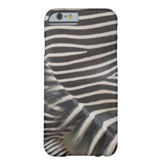 Zebras Barely There iPhone 6 Case