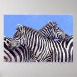 Zebras by Donna Crawshaw Print