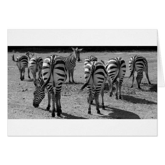 Zebras Card