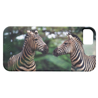zebras case for the iPhone 5