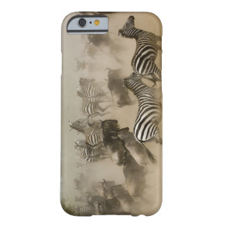 zebras (Equus burchelli) and wildebeest Barely There iPhone 6 Case