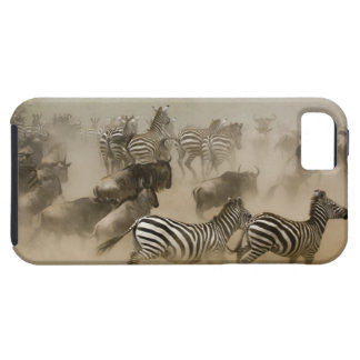 zebras (Equus burchelli) and wildebeest iPhone 5 Covers