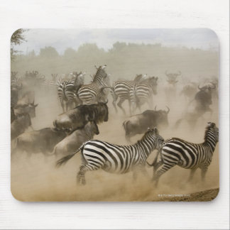 zebras (Equus burchelli) and wildebeest Mouse Pad
