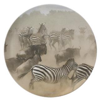 zebras (Equus burchelli) and wildebeest Plate