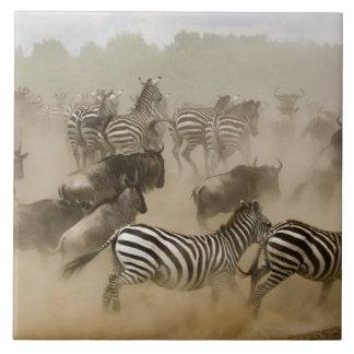 zebras (Equus burchelli) and wildebeest Large Square Tile
