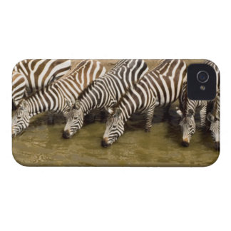 Zebras (Equus quagga) drinking from Talek River, Case-Mate iPhone 4 Case