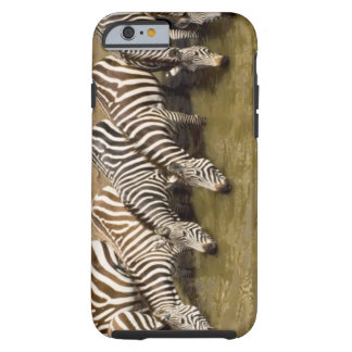 Zebras (Equus quagga) drinking from Talek River, Tough iPhone 6 Case