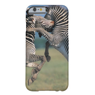 Zebras fighting (Equus burchelli) Barely There iPhone 6 Case
