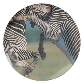 Zebras fighting (Equus burchelli) Dinner Plate