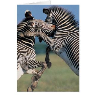 Zebras fighting (Equus burchelli) Greeting Card