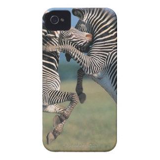 Zebras fighting (Equus burchelli) iPhone 4 Case-Mate Cases