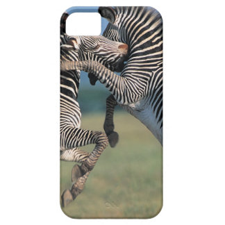 Zebras fighting (Equus burchelli) iPhone 5 Case