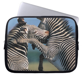 Zebras fighting (Equus burchelli) Laptop Computer Sleeves
