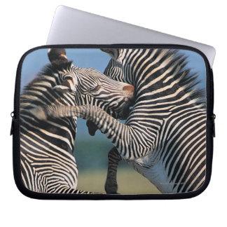 Zebras fighting (Equus burchelli) Laptop Sleeve