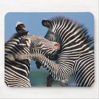 Zebras fighting (Equus burchelli) Mouse Pad