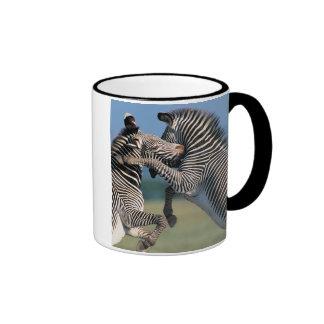 Zebras fighting (Equus burchelli) Mug