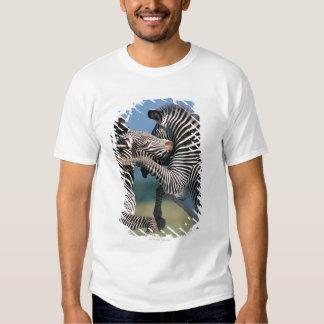Zebras fighting (Equus burchelli) Shirts