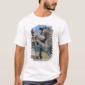 Zebras fighting (Equus burchelli) T-Shirt