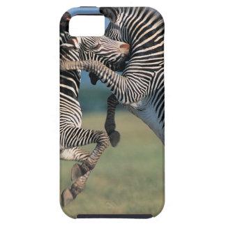 Zebras fighting (Equus burchelli) Tough iPhone 5 Case