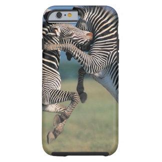 Zebras fighting (Equus burchelli) Tough iPhone 6 Case