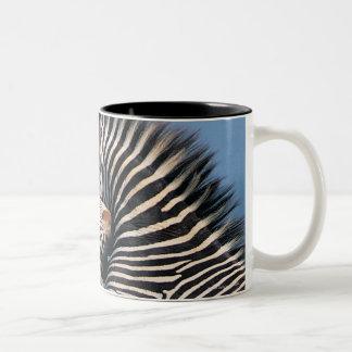 Zebras fighting (Equus burchelli) Two-Tone Coffee Mug