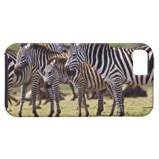 Zebras herding in the fields of the Maasai Mara iPhone 5 Case
