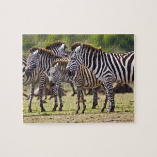Zebras herding in the fields of the Maasai Mara Jigsaw Puzzle