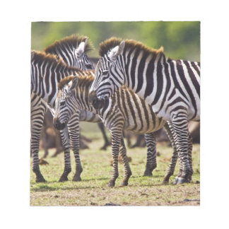 Zebras herding in the fields of the Maasai Mara Notepad