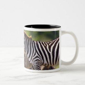 Zebras herding in the fields of the Maasai Mara Two-Tone Coffee Mug