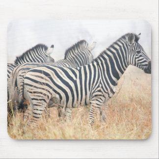 Zebras in early morning dust, Kruger National 2 Mouse Mat