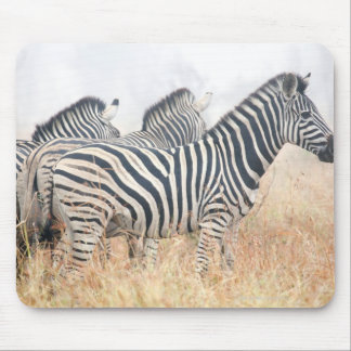 Zebras in early morning dust, Kruger National 2 Mouse Pad