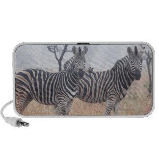 Zebras in early morning dust, Kruger National Laptop Speakers