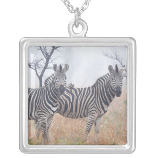 Zebras in early morning dust, Kruger National Silver Plated Necklace