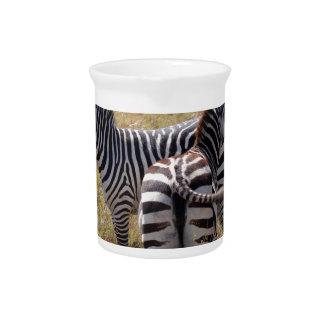 Zebras in Nairobi Kenya Pitcher