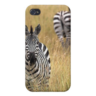 Zebras in tall grass covers for iPhone 4