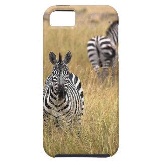 Zebras in tall grass iPhone 5 case