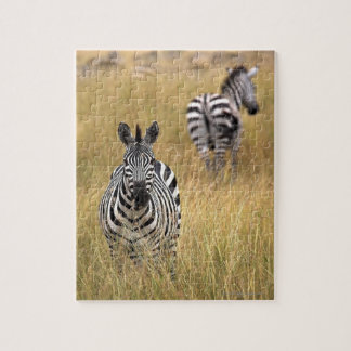Zebras in tall grass puzzles