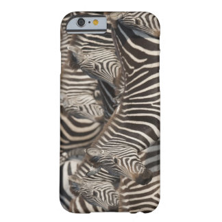Zebras, Kenya, Africa Barely There iPhone 6 Case
