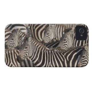 Zebras, Kenya, Africa iPhone 4 Cases
