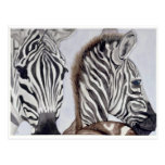Zebras Mother and Child Post Cards