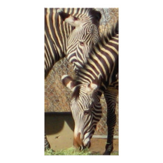 Zebras Picture Card