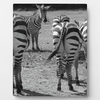 Zebras Plaque