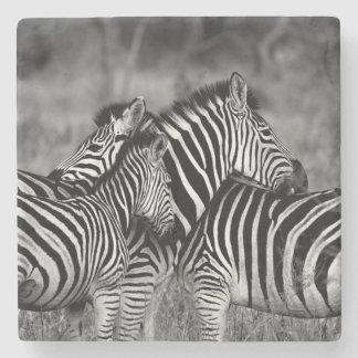 Zebras Stone Beverage Coaster