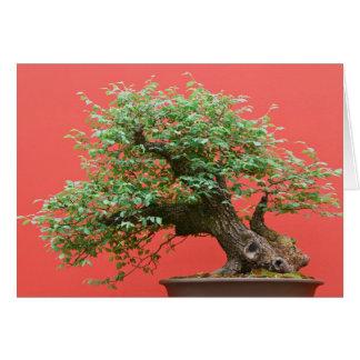Zelkova bonsai tree greeting card