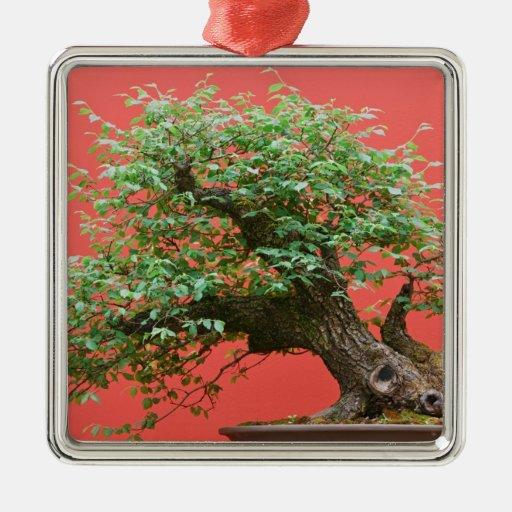 Zelkova bonsai tree christmas tree ornaments