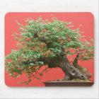 Zelkova bonsai tree mouse mat