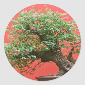 Zelkova bonsai tree round sticker