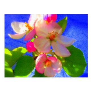 Zen Blossoms Postcard